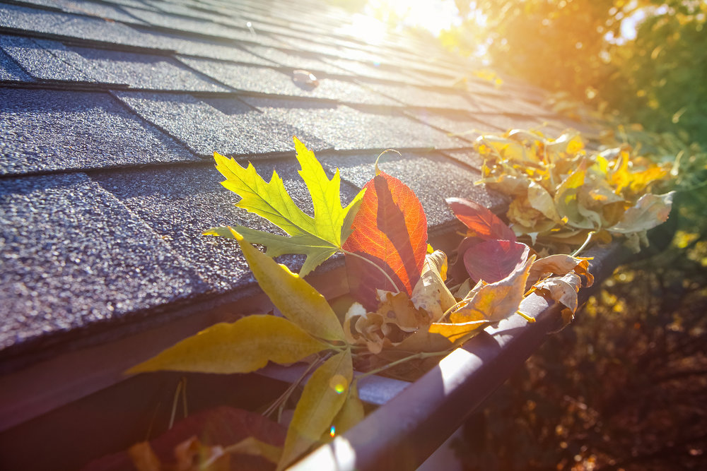 Photo of colorful fall leaves in the gutter