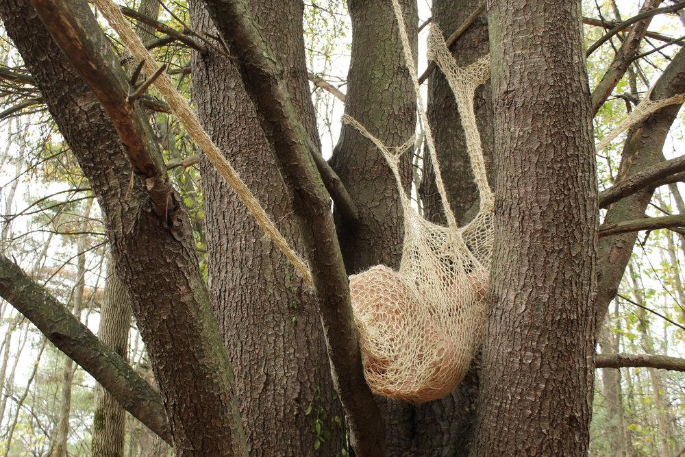05_treewomb.jpg