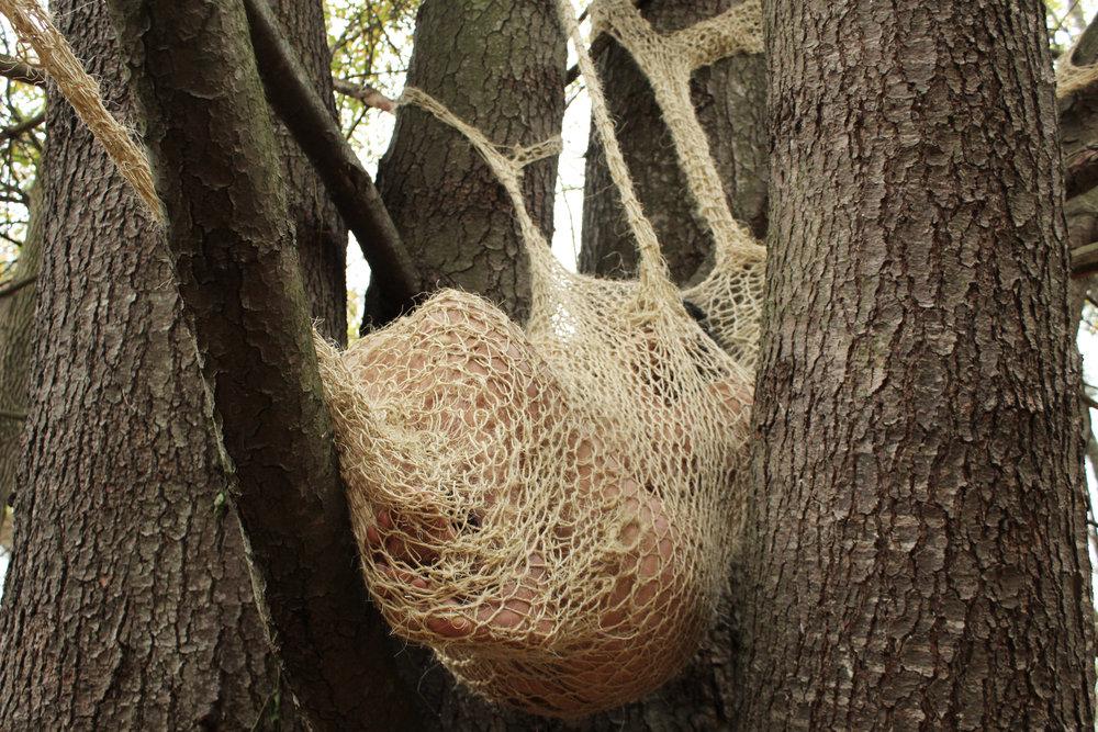 06_treewomb.jpg