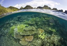 Papua-Indonesia1-218x150.jpg