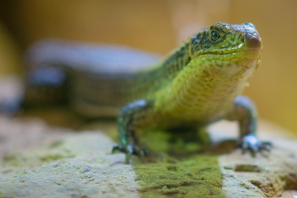 Bristol Zoo - Sat 27 December 2014 -7225.jpg