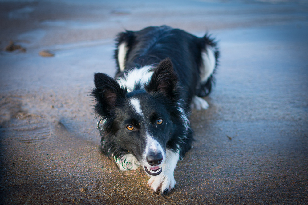 Soda at Seacliff Beach - Sat 1 November 2014 -4629-Edit.jpg