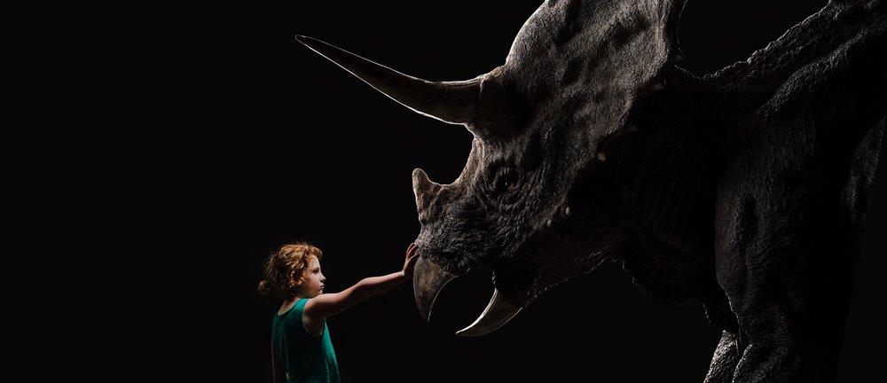 Triceratops side wide.JPG