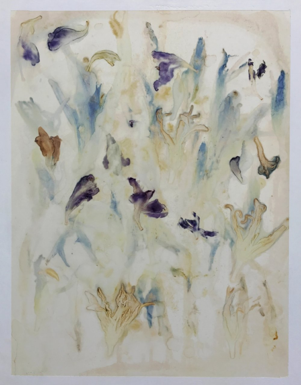 Hemerocallis Gladiolus #42