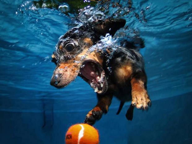 underwater3.jpeg
