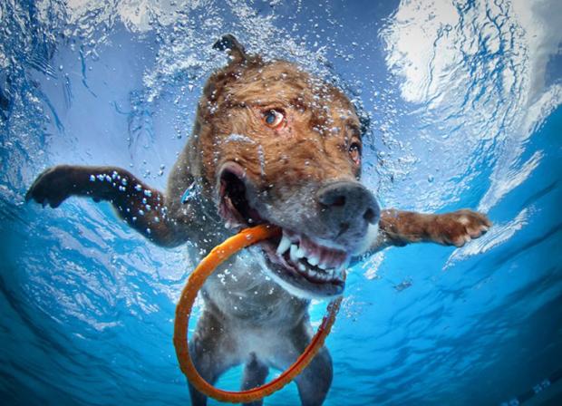 underwater6.jpg