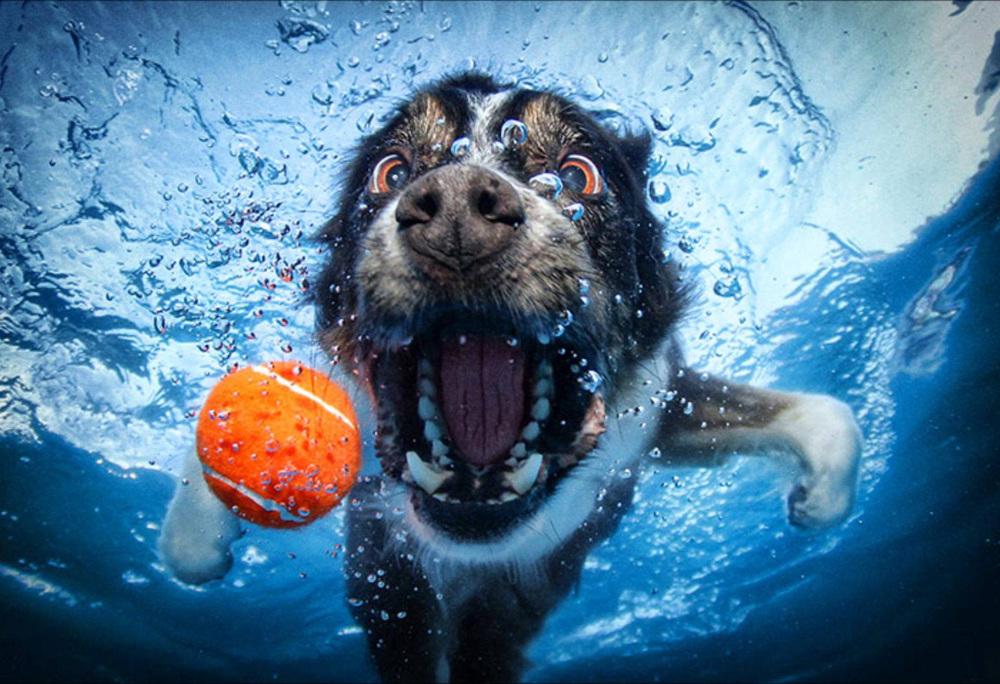 underwater12.jpg
