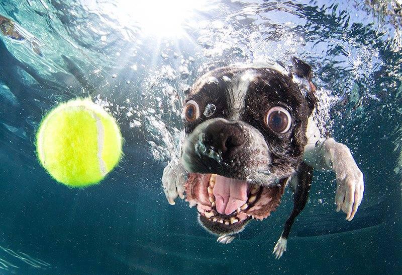 underwater555.jpg