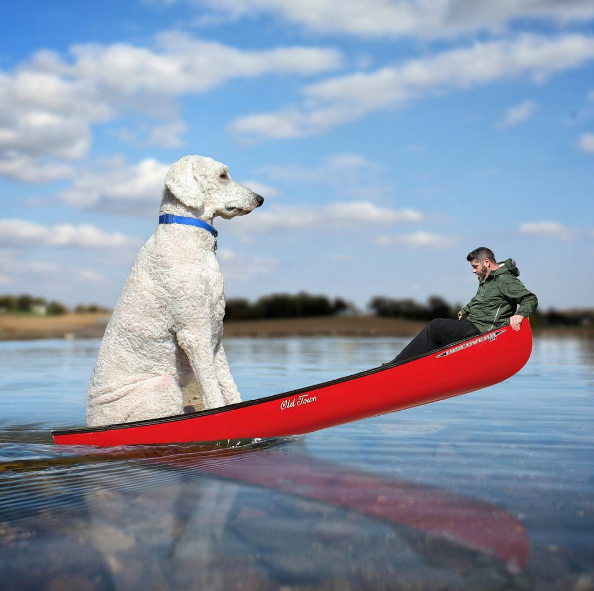 boating-dog.png