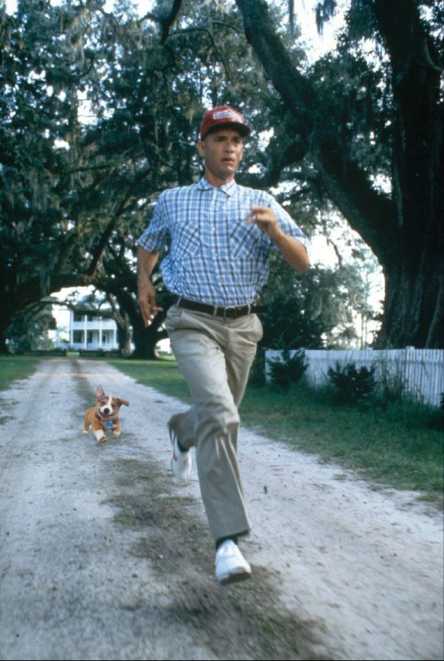 cute puppy forest gump
