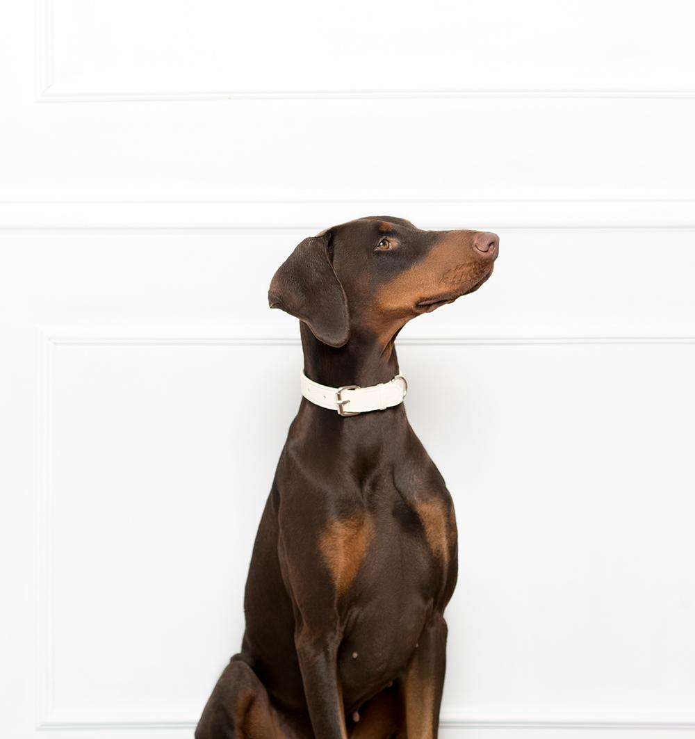 white dog collar