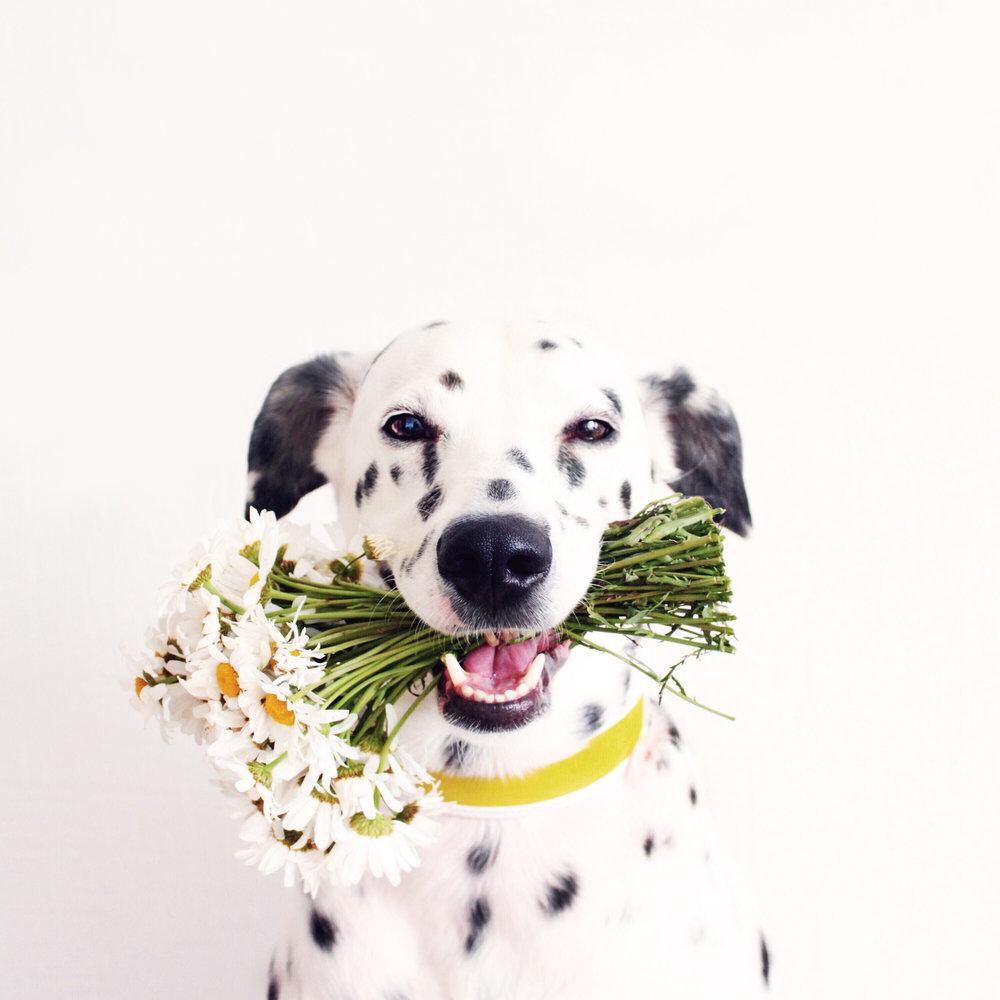 yellow collar