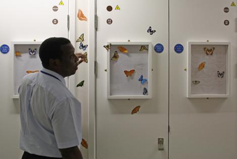 Butterflies Comp 2.jpg