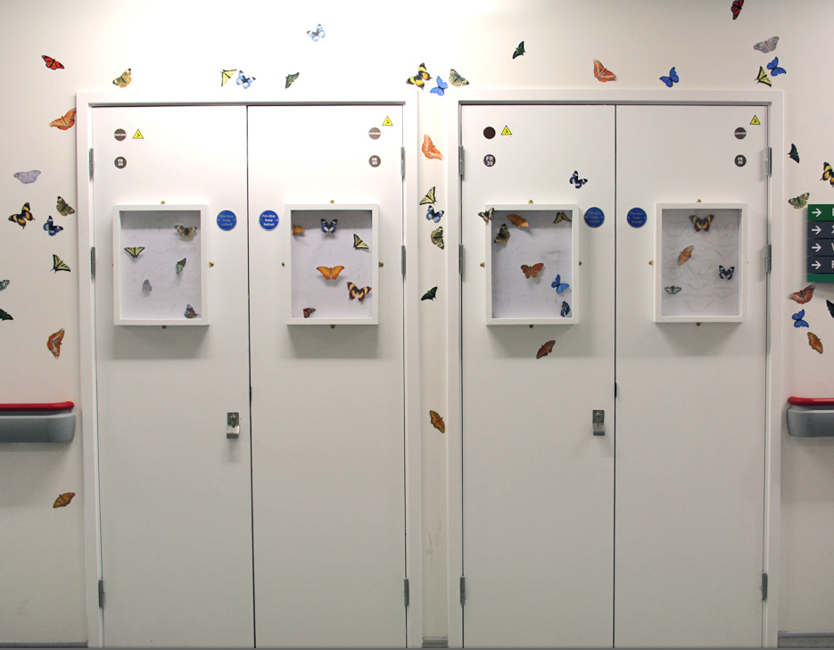 Butterflies Comp.jpg