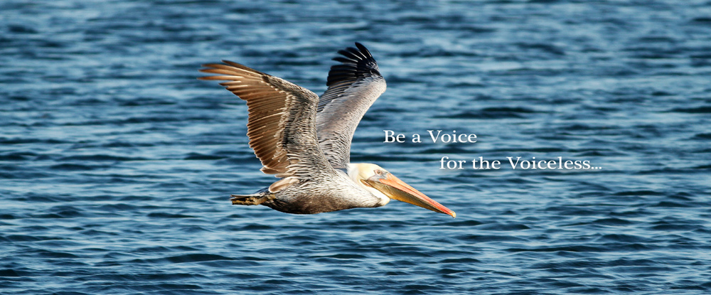 d2o-header-pelican.jpg