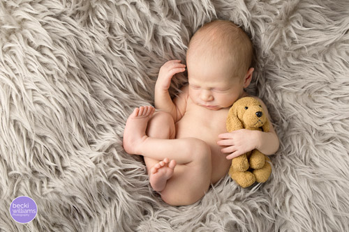 Newborn Photo Shoot Hemel Hempstead - fur, dog