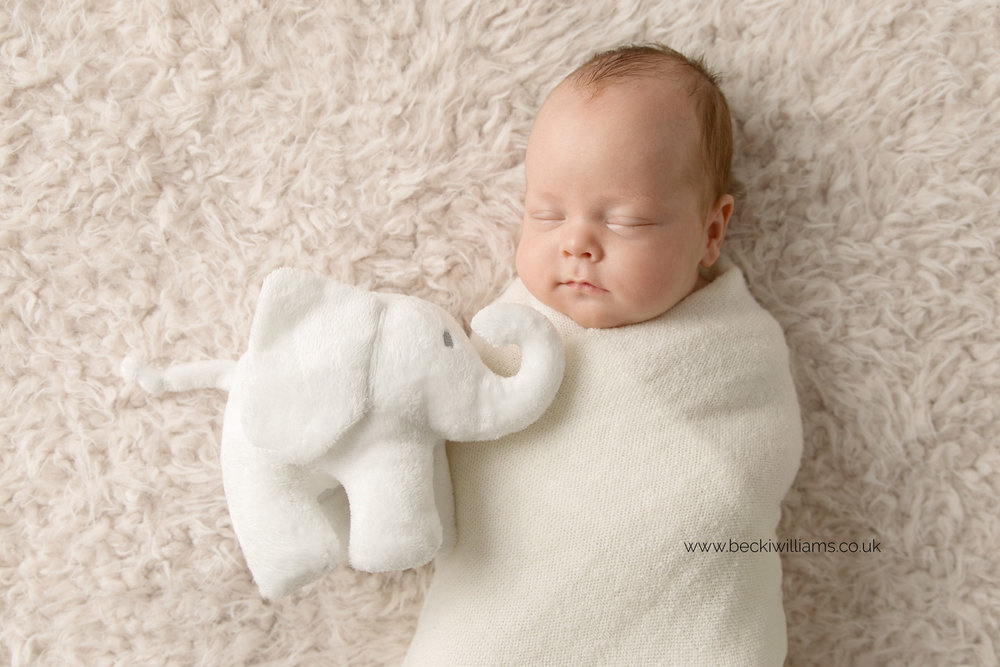 newborn baby boy with good luck elephant from little white company for photo shoot in hemel hempstead