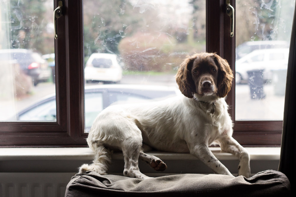 newborn-photography-hemel-hempstead-january-spaniel-window-nose-art.jpg