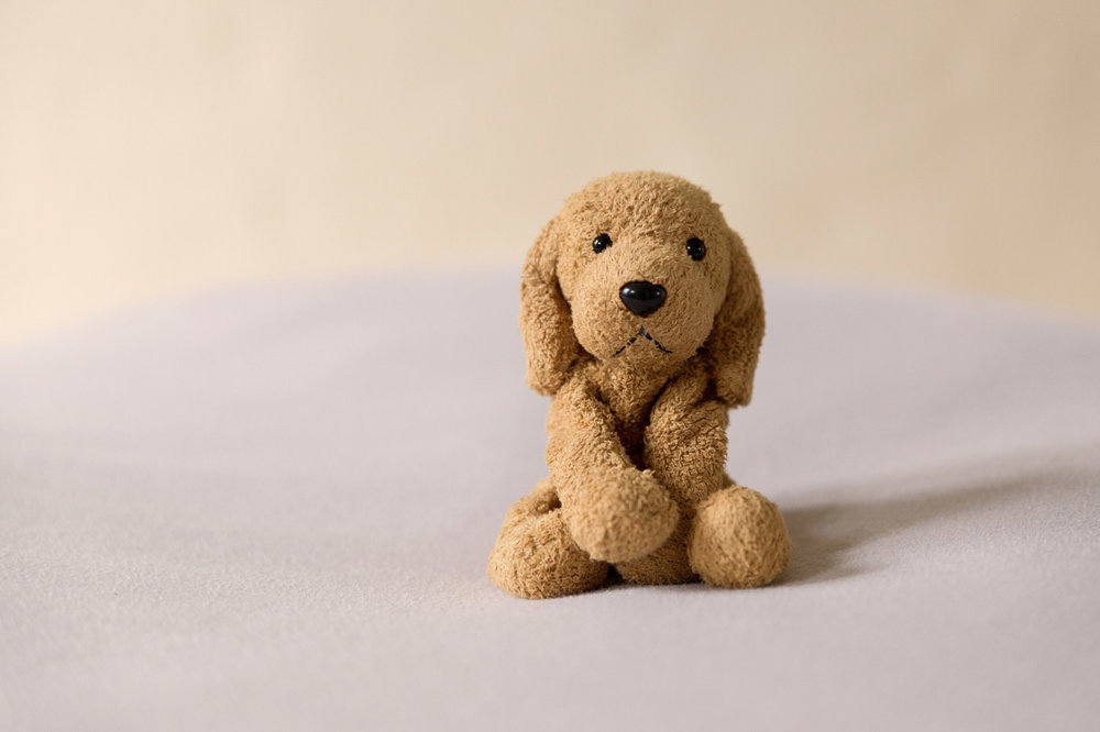 newborn-photos-st-albans-props-doggy-bear.jpg
