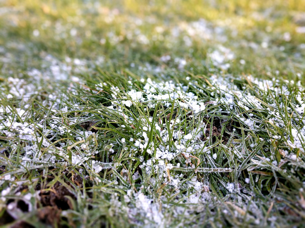 newborn-photography-hemel-hempstead-frosty-grass.jpg