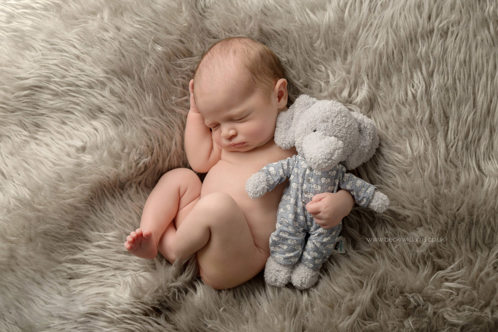 newborn-photo-shoot-hemel-hempstead-toy-elephant.jpg
