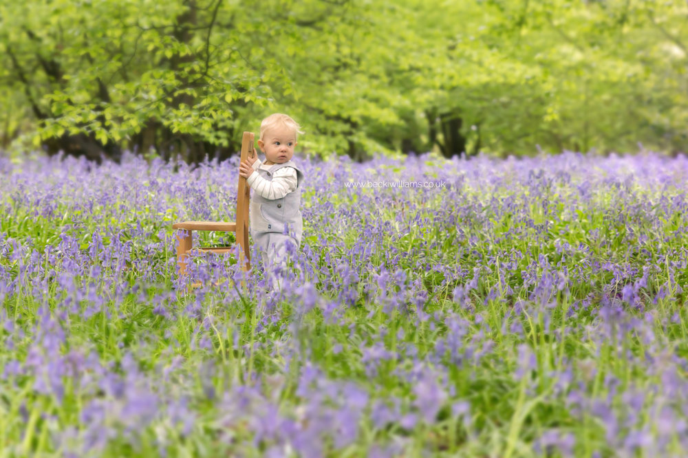 little boy standing, holding a chair in amongst the bluebells in st albans