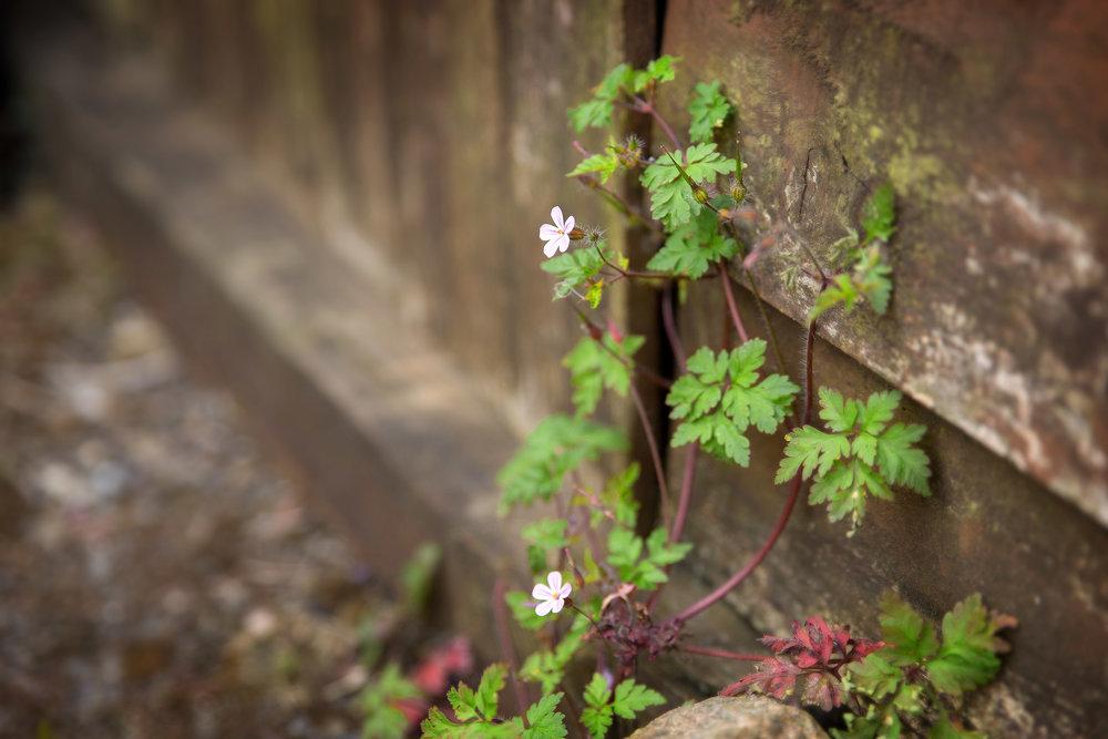 photo-project-2018-may-Hemel-Hempstead-3.jpg