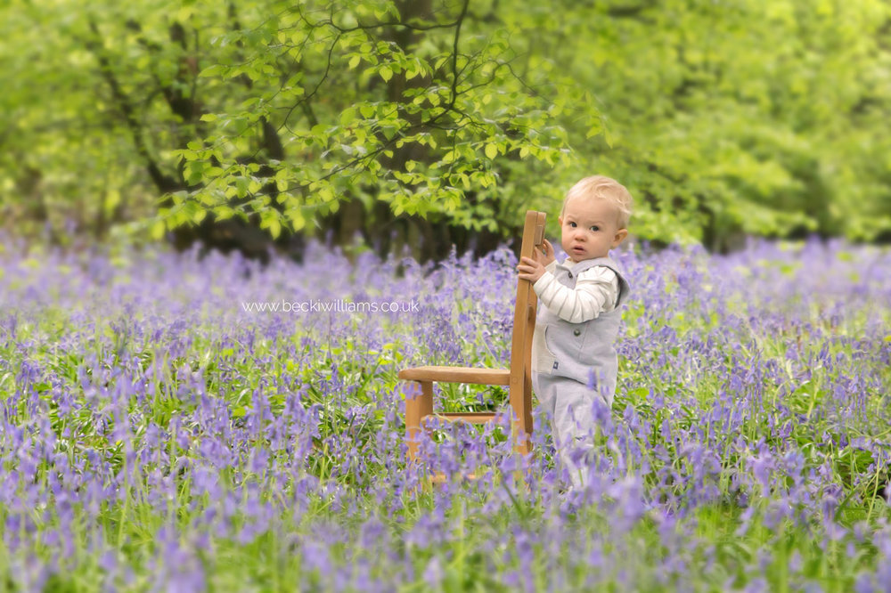 little boy, holding onto the back on chair surrounded by bluebells