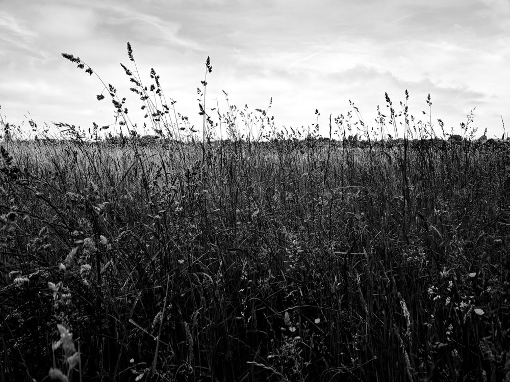 photo-project-2018-June-Hemel-Hempstead-.jpg
