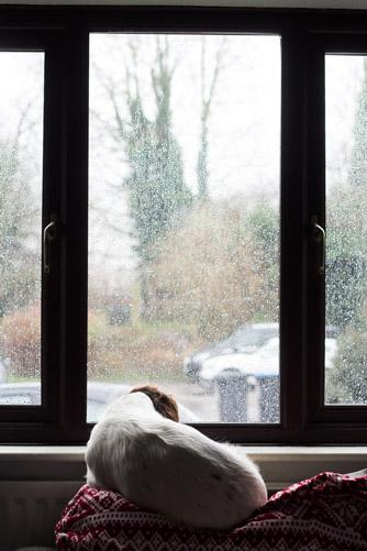 newborn-photography-hemel-hempstead-january-dog-window.jpg