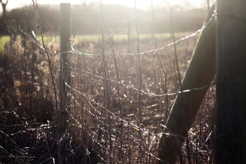 newborn-photography-hemel-hempstead-january-winter-fence.jpg