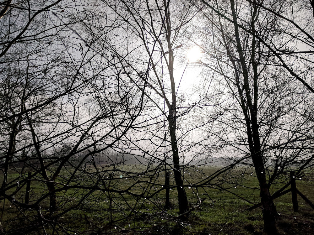 photography-in-hertfordshire-photo-project-4.jpg