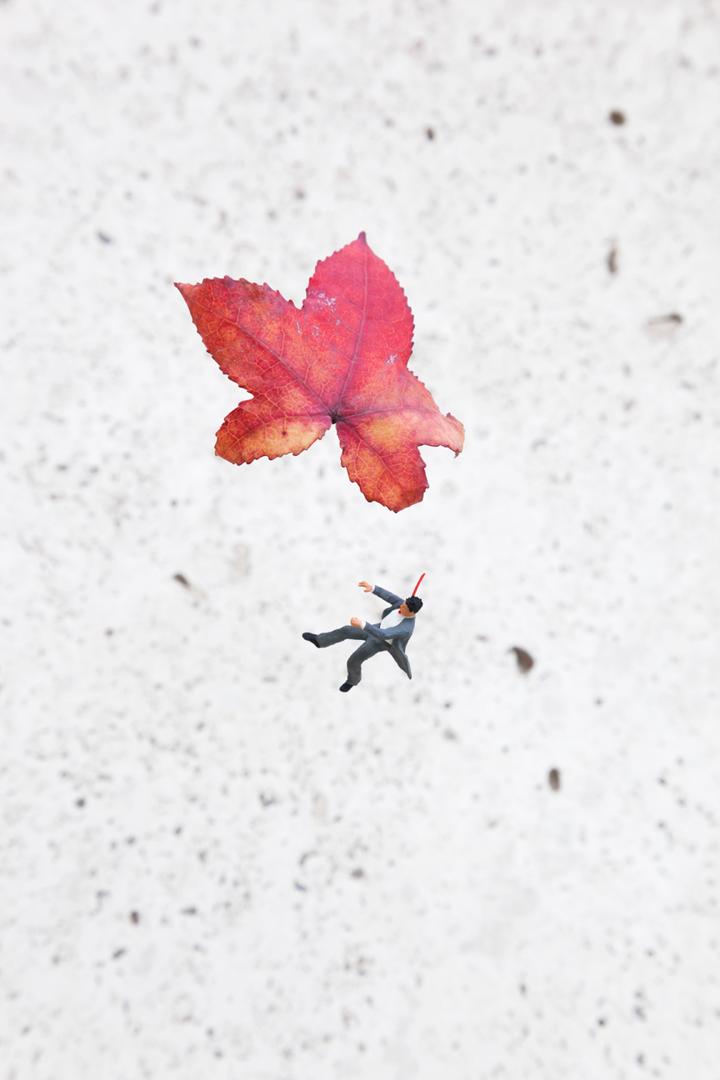 Fall-1_LowRes72dpi.jpg