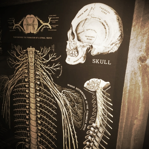 apiary the science of chiropractic care apiary chiropractic