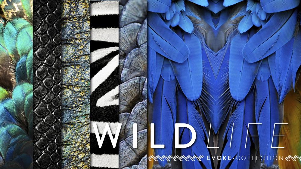 evoke wildlife heather.jpg