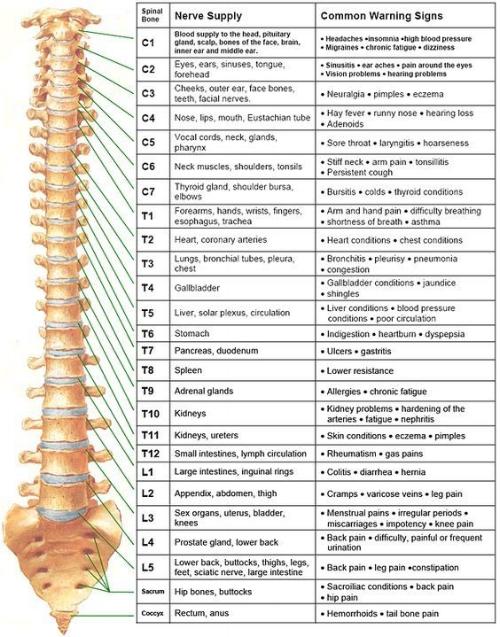 Nerves+of+the+Human+Body.jpg