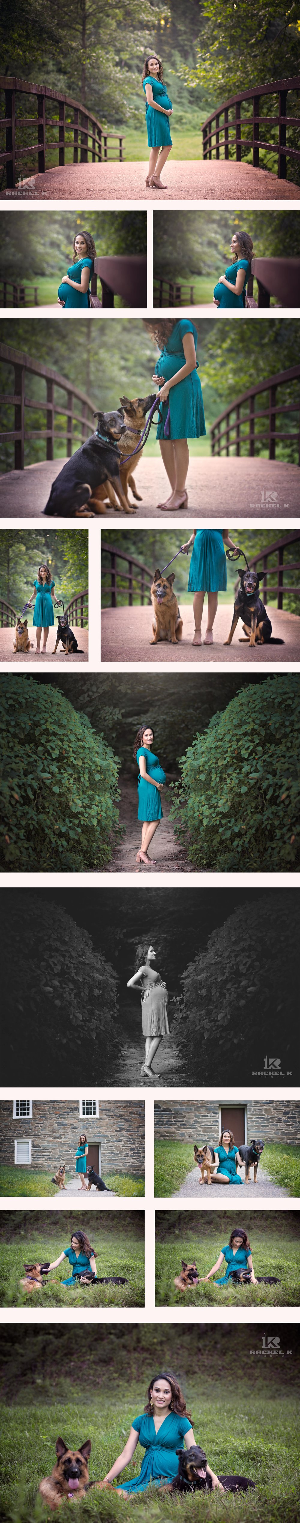 Maternity session with dogs in Northern Virginia