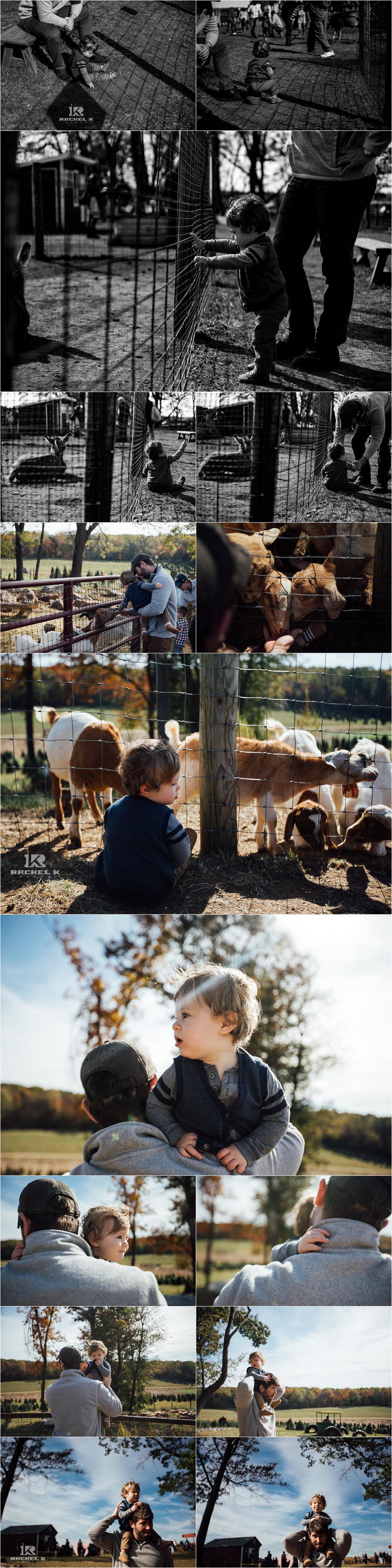 Fairfax Virginia photographer Rachel K Photo's October personal photos