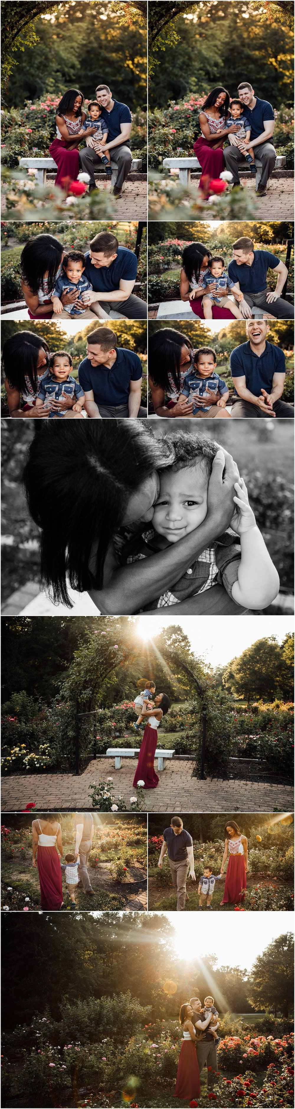 Rose garden family session with toddler by Madison Alabama family photographer Rachel K Photo