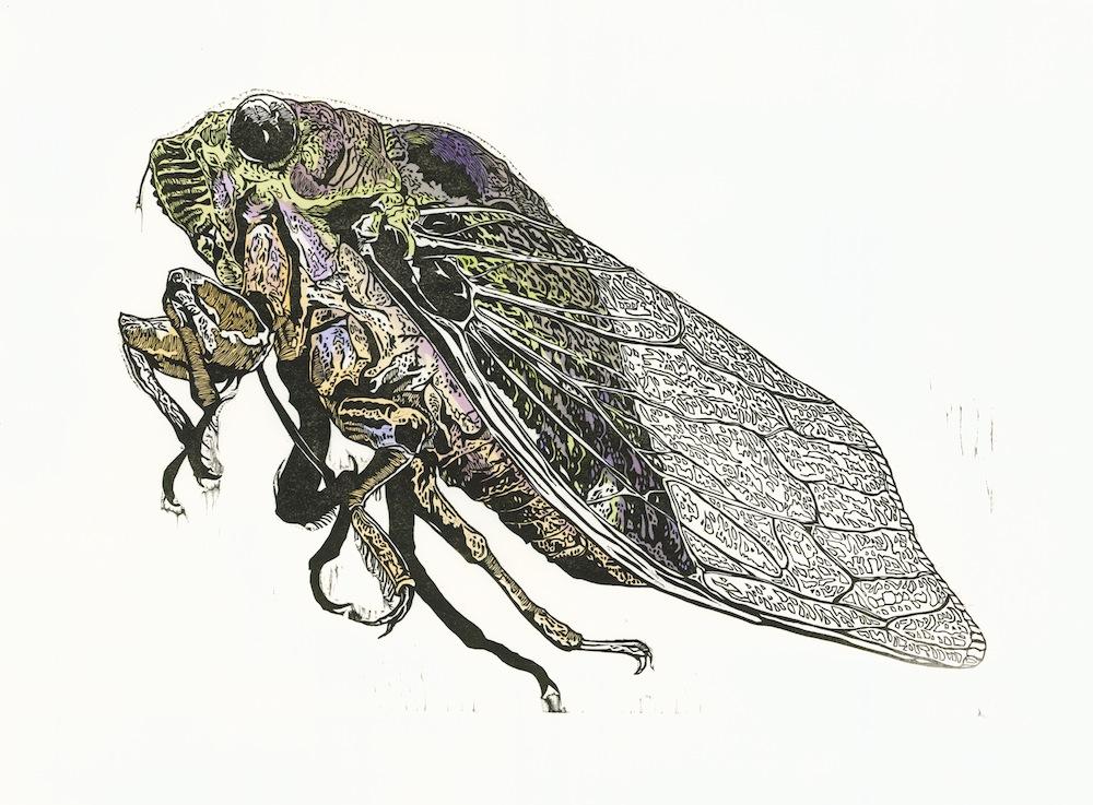 Cicada wb-1