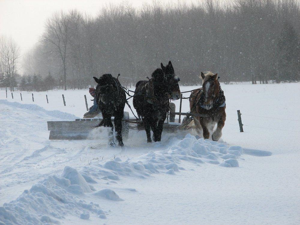 snow plowing 1.jpg