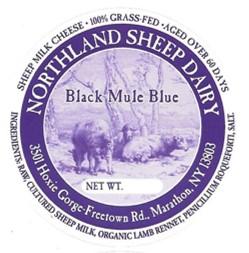 Black Mule Blue