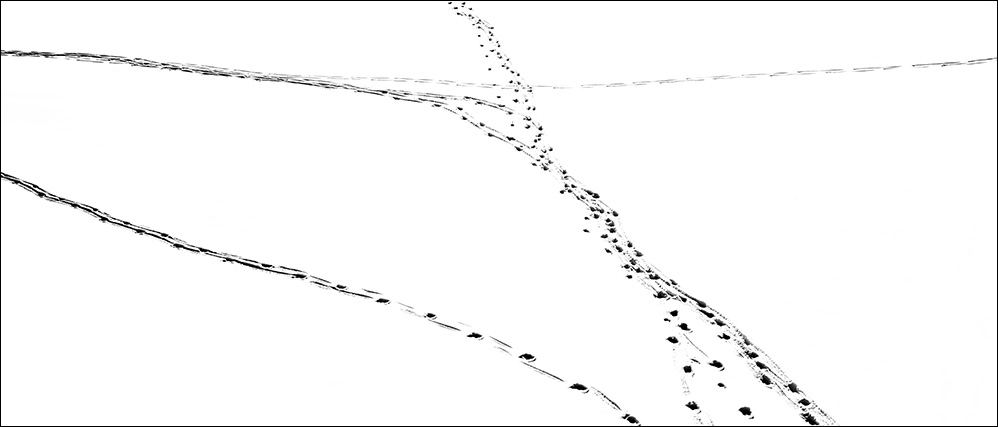 01_Snow Tracks 8.jpg