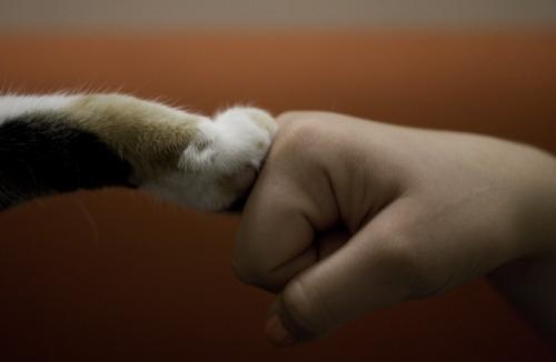 kitty-fist-bump-14117-1288021656-7