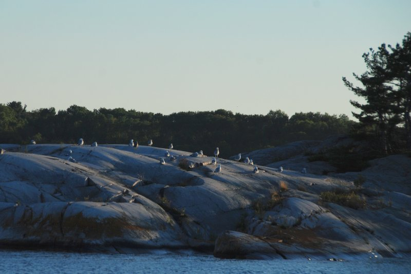 We caught the tail end of this seagull meeting on our way to anchor near Little La Cloche Island.