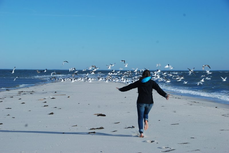 I chased some birds off the tip of the beach, from which the island shrinks each year.