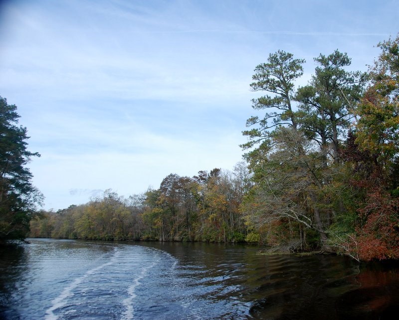 The Dismal Swamp canal opens up after about 20 miles and the cyrpress and cedar trees become more visible.