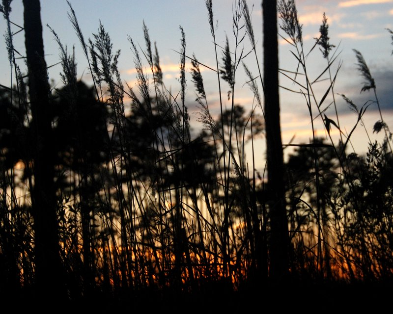 The colors and shapes of a North Carolina swamp at sunset.