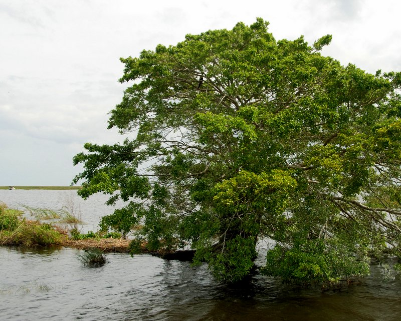 Scenery on the Okeechobee waterway