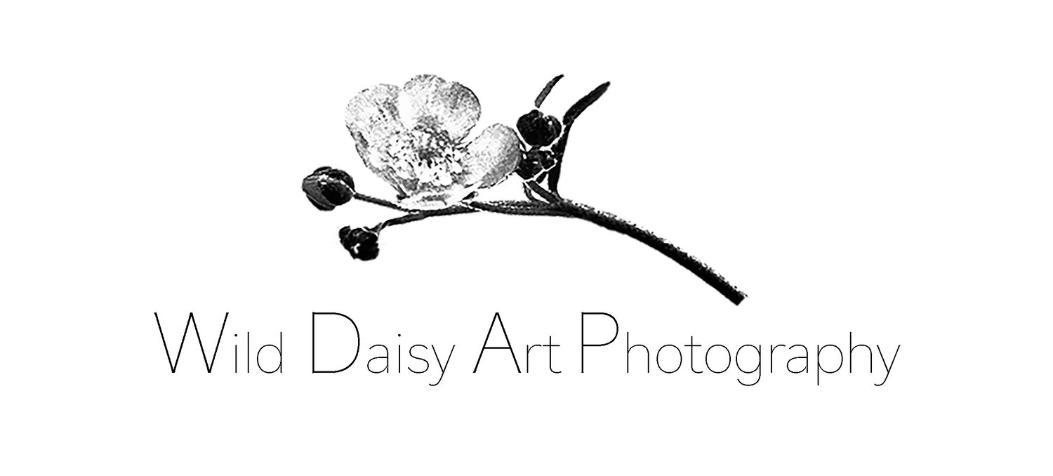 Wild Daisy Art Photography